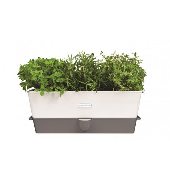 Conservateur à herbes fraîches en pot 3 emplacements
